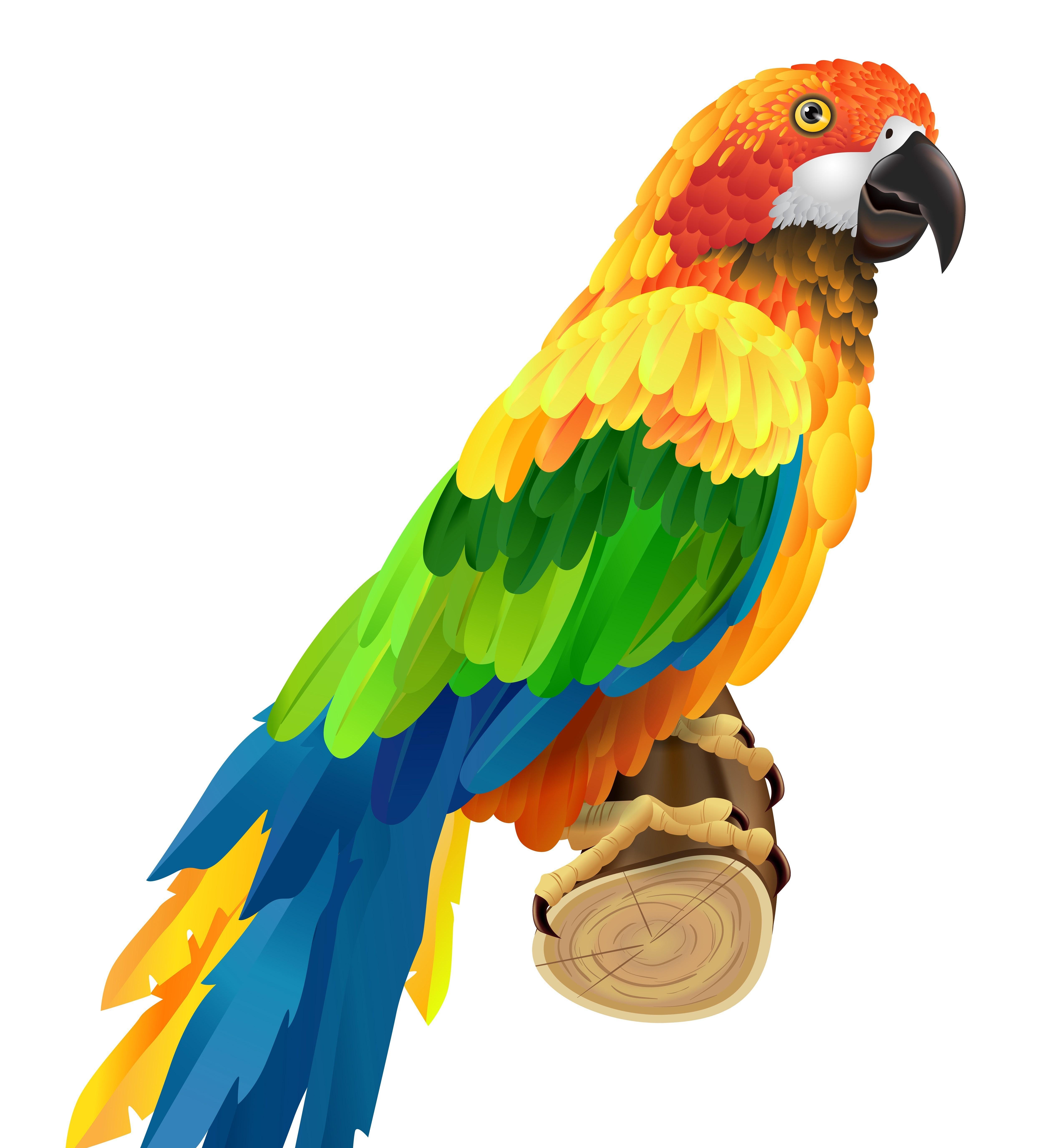 Картинка попугай для детей, люблю тебя мне